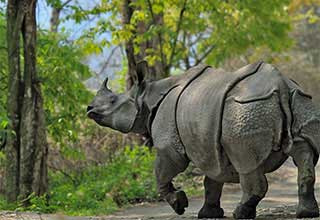 Kaziranga at a Glance