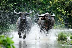 Wildlife And Nature Tour Package